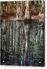 Cypress Swamp Reflections Acrylic Print by Joseph G Holland