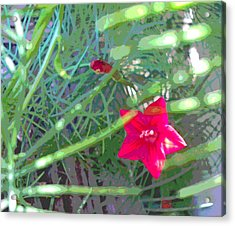 Cypress Vine With Foliage Acrylic Print by Padre Art