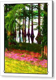 Cypress With Oxalis Acrylic Print by Judi Bagwell