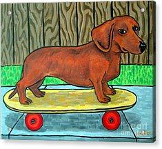 Dachshund Skateboarding Acrylic Print by Jay  Schmetz