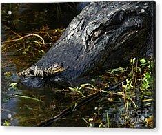 Daddy Alligator And His Baby Acrylic Print by Sabrina L Ryan