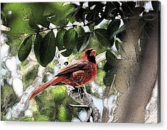 Acrylic Print featuring the photograph Daddy Cardinal by Donna G Smith