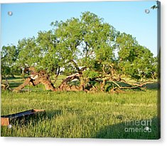 Dad's Tree Acrylic Print