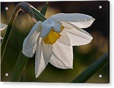 Daffodil Closeup Acrylic Print by Ron Smith
