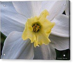 Daffodil Emotions Acrylic Print