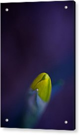 Acrylic Print featuring the photograph Daffodil by Jane Melgaard
