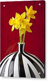 Daffodils Acrylic Print by Garry Gay