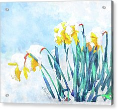 Daffodils With Bad Timing Acrylic Print by Suni Roveto