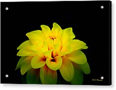 Acrylic Print featuring the photograph Dahlia Delight by Jeanette C Landstrom