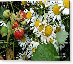 Acrylic Print featuring the digital art Daisies And Strawberries by Vicky Tarcau