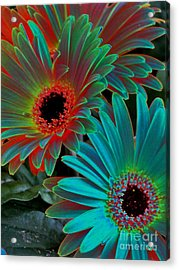 Daisies From Another Dimension Acrylic Print by Rory Sagner