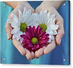 Daisies In Child Hands Acrylic Print by Natalia Ganelin