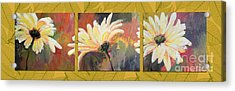 Daisies Three Acrylic Print