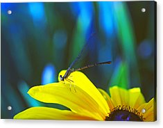 Daisy And Dragonfly Acrylic Print