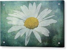 Daisy Acrylic Print by Dawn OConnor