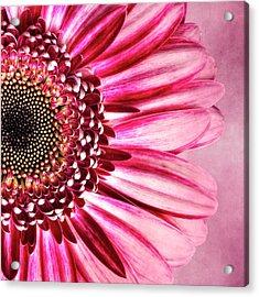 Daisy IIi Acrylic Print by Tamyra Ayles