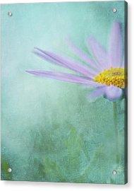 Daisy In Mist Acrylic Print by Sharon Lapkin