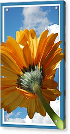 Daisy In The Sky Acrylic Print by Rozalia Toth