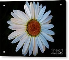 Acrylic Print featuring the photograph Daisy by Jasna Gopic