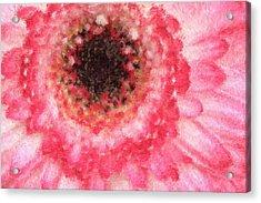 Daisy Love Acrylic Print by Heidi Smith