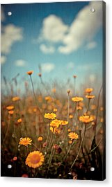 Daisy Meadow Acrylic Print by Boston Thek Imagery