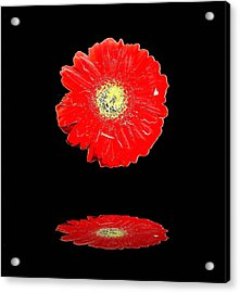 Acrylic Print featuring the photograph Daisy Reflection by Carolyn Repka