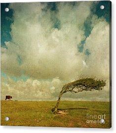Daisy Spots A Tree Acrylic Print by Paul Grand
