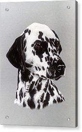 Dalmatian Acrylic Print by Patricia Ivy