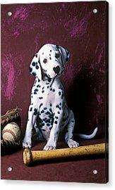 Dalmatian Puppy With Baseball Acrylic Print by Garry Gay