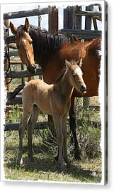 Acrylic Print featuring the photograph Dam And Foal by Judy Deist