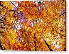 Dance Of The Autumn Trees Acrylic Print by Kimberleigh Ladd