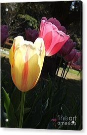 Dance Of The Tulips Acrylic Print by Therese Alcorn