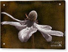 Dancing In The Breeze Acrylic Print by Deborah Benoit
