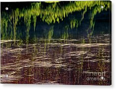 Dancing On Water Acrylic Print by Marcus Angeline