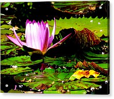 Acrylic Print featuring the photograph Dancing Pink Water Lilly by Jodi Terracina