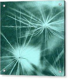 Dandelion Art 3 Acrylic Print