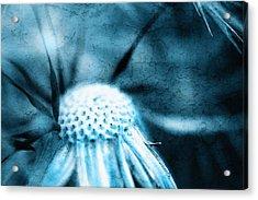 Dandelion Art 4 Acrylic Print