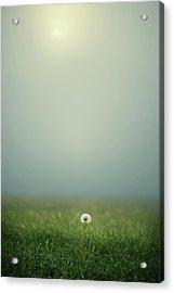 Dandelion On Meado Acrylic Print by Elisabeth Schmitt