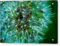 Dandelion Puff-green Acrylic Print
