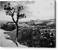 Dan's Eye View Of Bryce Acrylic Print