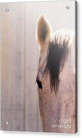 Dapple Devotion Acrylic Print by Betty LaRue