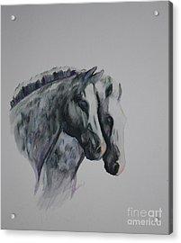 Dapple Duo Acrylic Print by Susan Herber