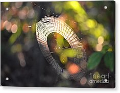 Dappled Web Of Deceit Acrylic Print by Maria Urso