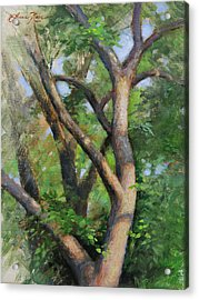 Dappled Woods Acrylic Print by Anna Rose Bain