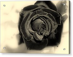 Acrylic Print featuring the photograph Dark Beauty by Kay Novy