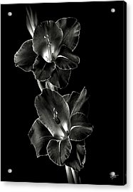 Dark Gladiolas In Black And White Acrylic Print