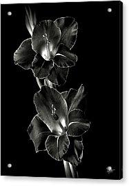 Dark Gladiolas In Black And White Acrylic Print