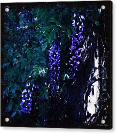 Dark Wisteria - In A Blackened Acrylic Print