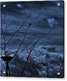 Darkblue Acrylic Print by Amr Miqdadi