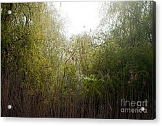 Darlington Park From Mclaughlin Bay Acrylic Print by Gary Chapple